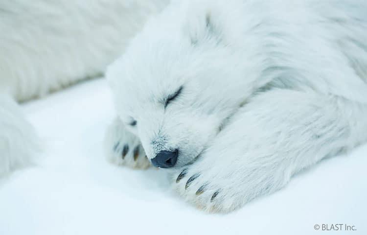 esculturas urso polar 4