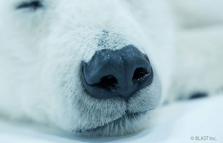 esculturas urso polar 6