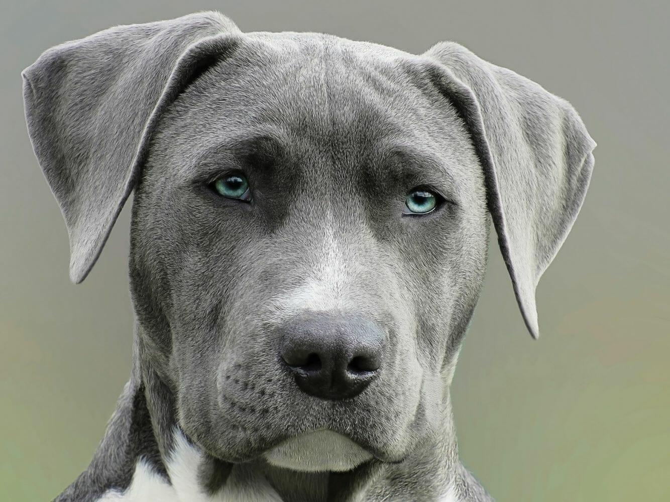 Cachorro olhando fixamente para a câmera