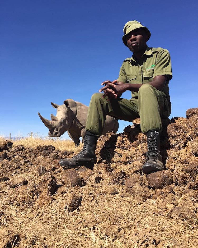 últimos rinocerontes brancos 2