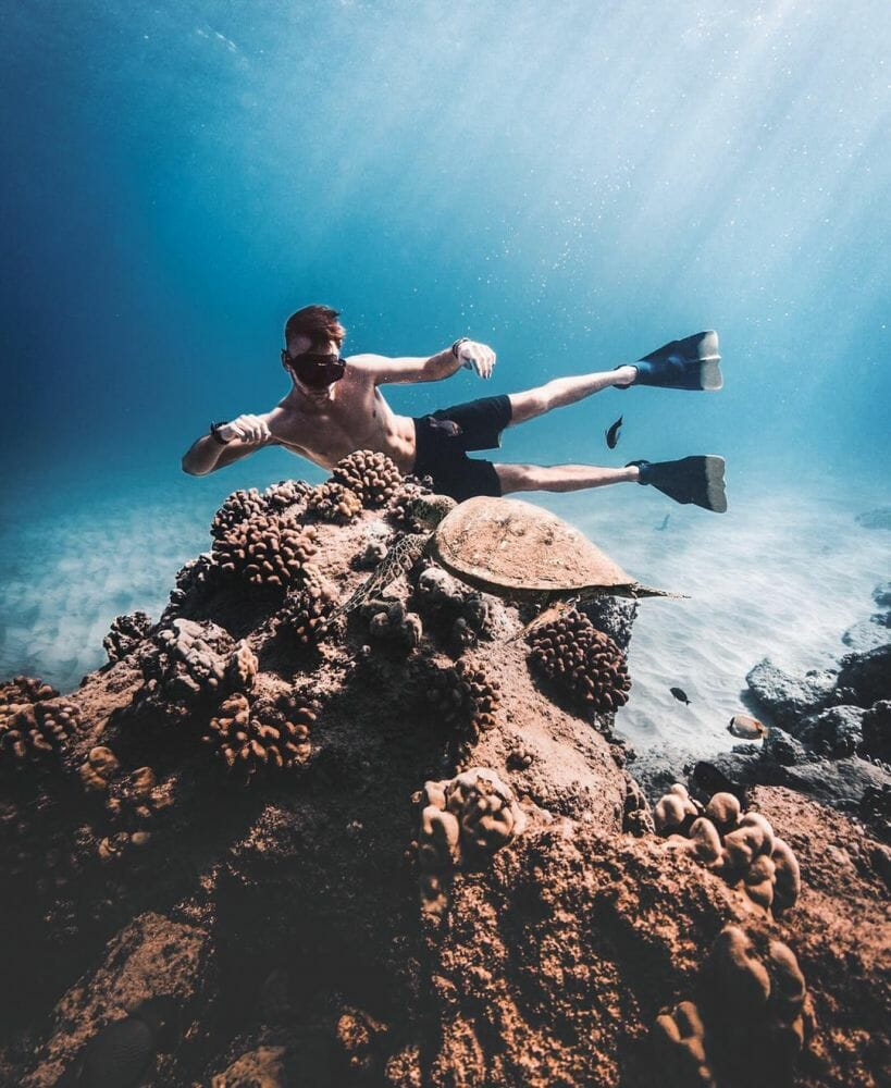 vida marinha 1