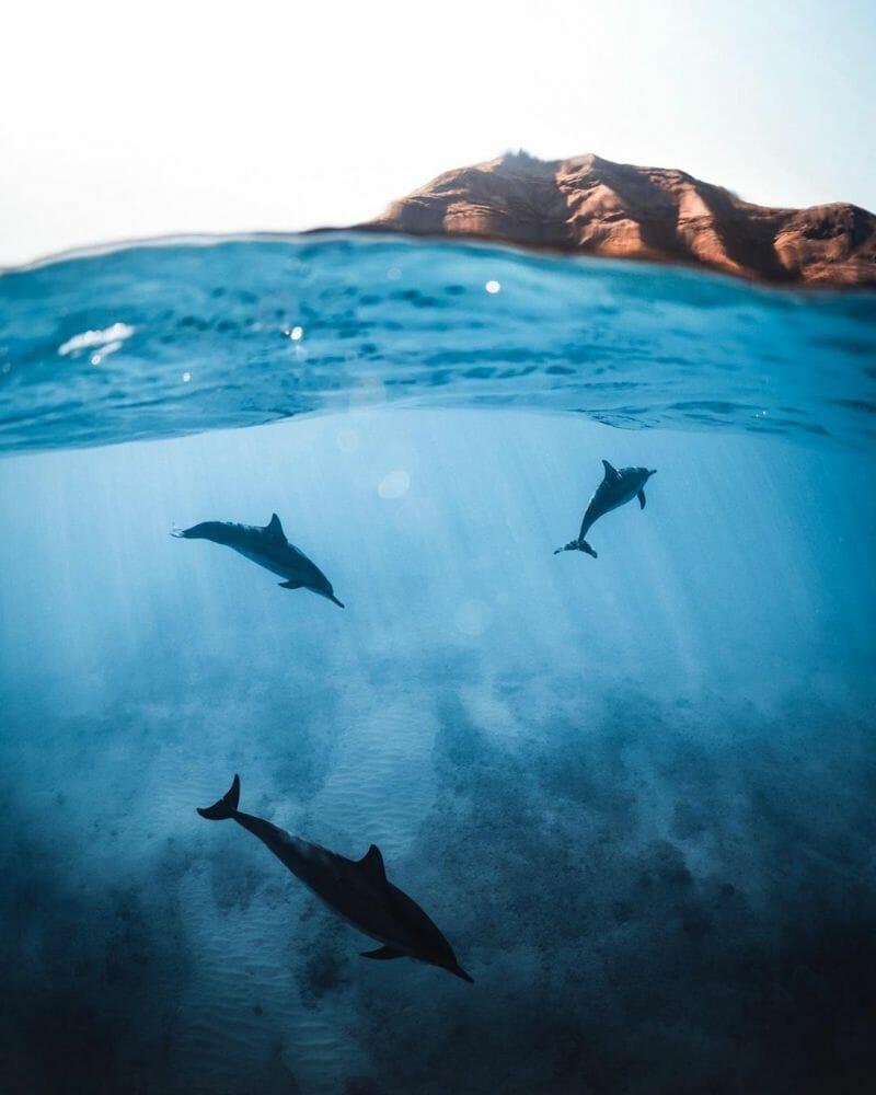vida marinha 3