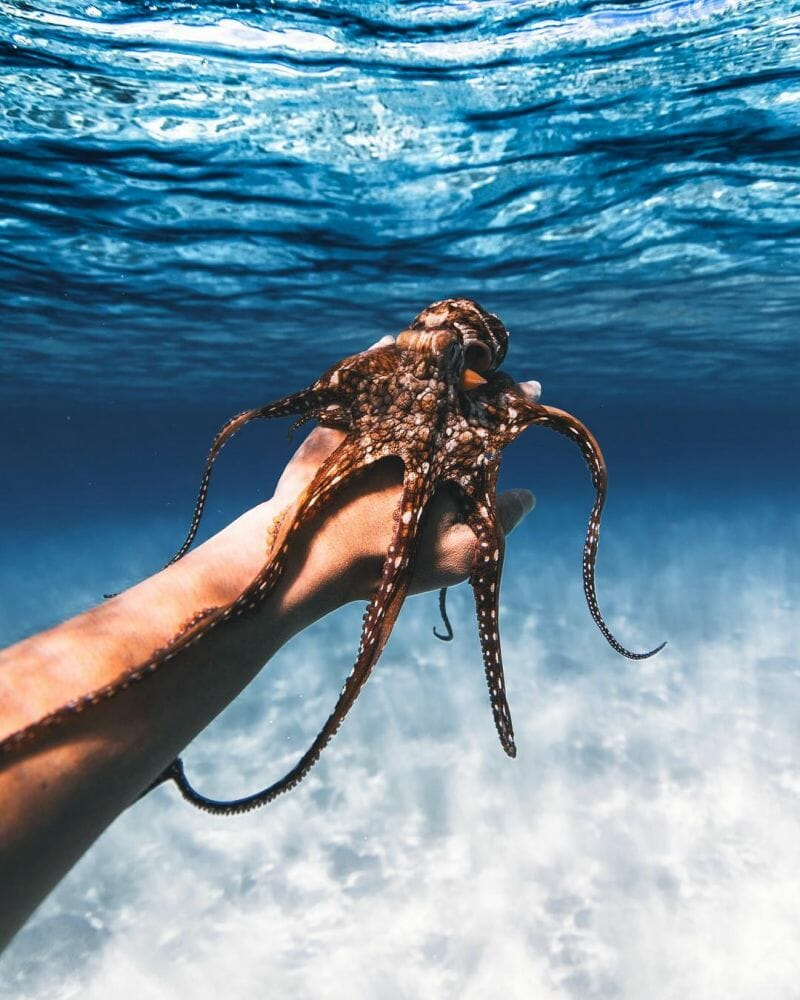 vida marinha 4