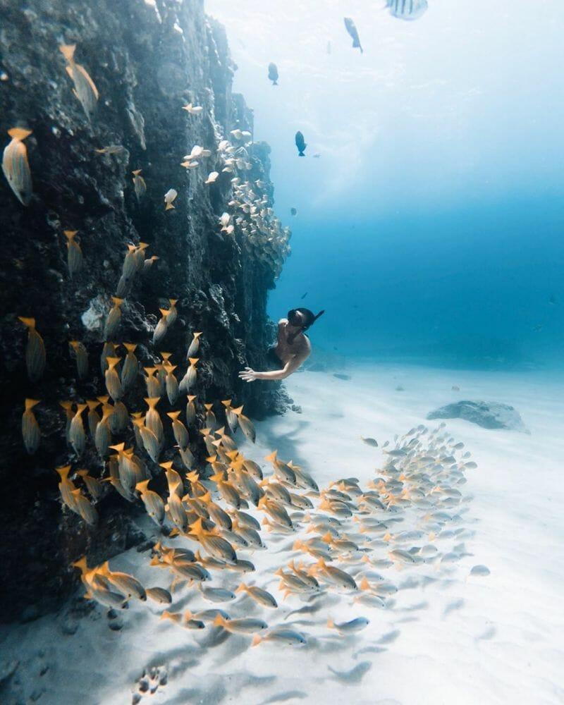 vida marinha 6