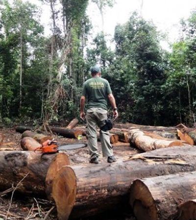 Para conter aquecimento, precisamos parar de desmatar e plantar 1,2 trilhão de novas árvores