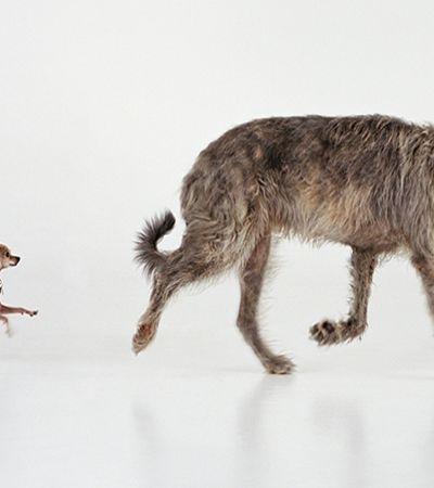 Londres ganha exposição sobre cachorros com curadoria de cachorros!
