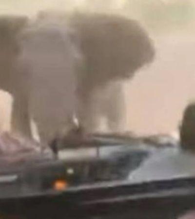 Elefante reage a invasão de espaço na África do Sul e motorista foge de marcha à ré