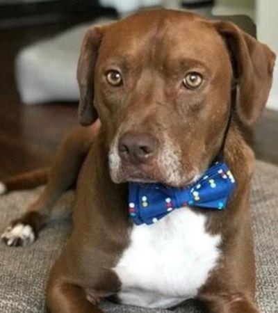Jovem costura gravatas para estimular adoção de animais e recebe elogios de Obama