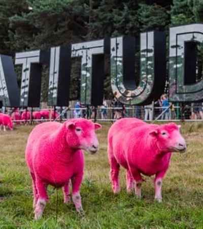 Festival de música é detonado após pintar ovelhas de rosa