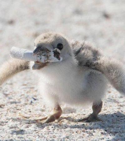 Foto de pássaro alimentando filhote com cigarro prova que a humanidade falhou