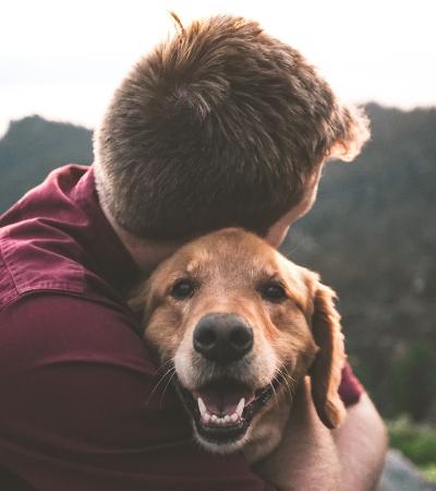 10 minutos de carinho em gatos e cachorros pode diminuir nível de estresse