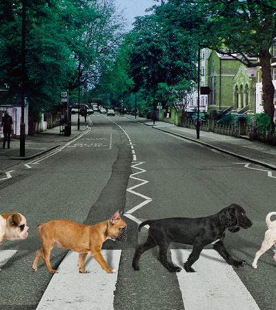 Campanha para o Dia do Rock recria capas de disco com cachorrinhos