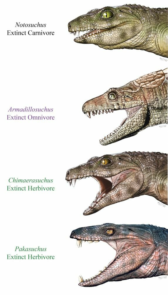 dinossauros vegetarianos 1