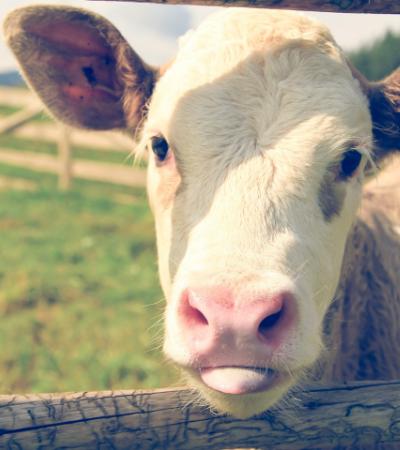 Ativistas dublam documentário sobre veganismo e liberam versão no YouTube