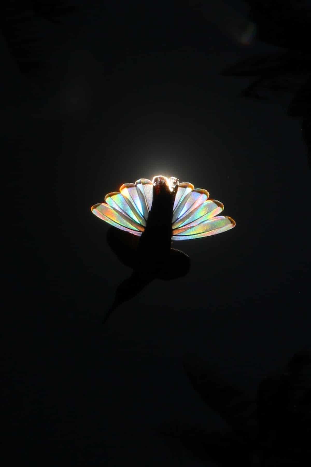 fenômeno beija flor 9