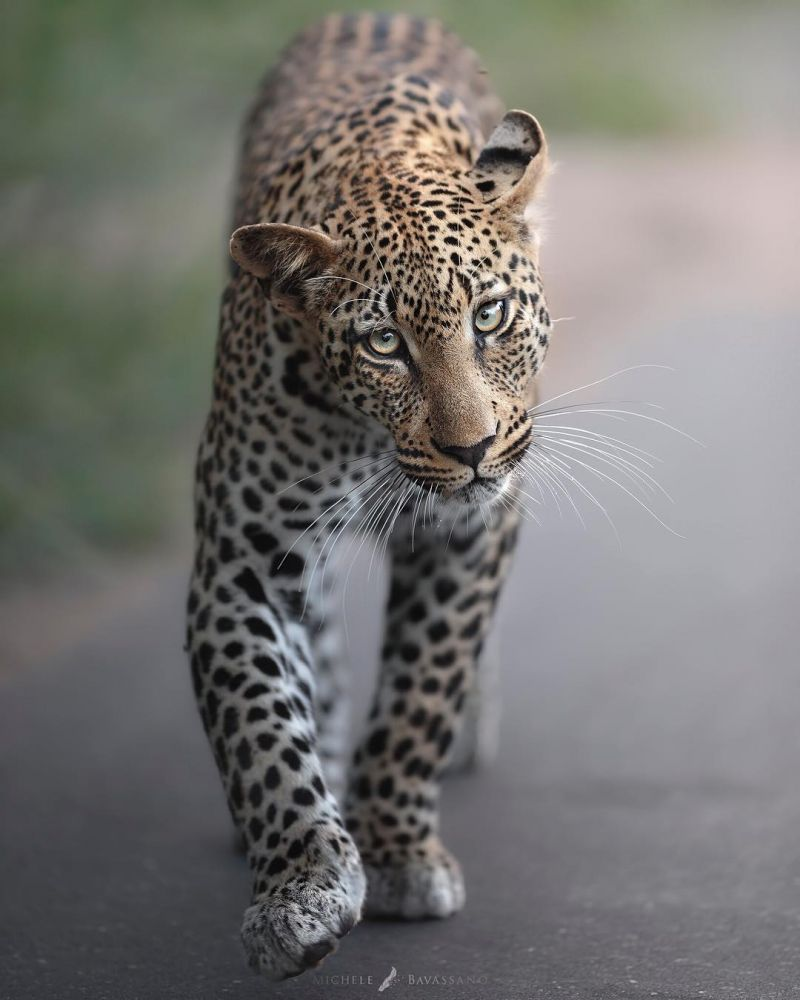 fotos vida selvagem 4