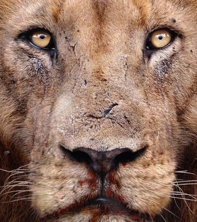 Série de fotos mostra a vida selvagem em todo seu esplendor