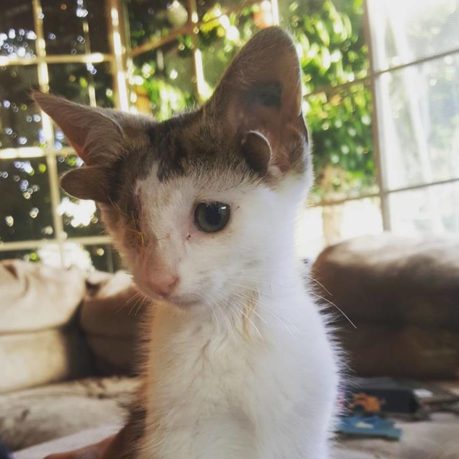 gatinho 4 orelhas 1