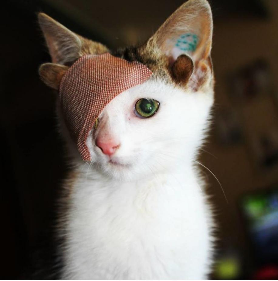 gatinho 4 orelhas 3