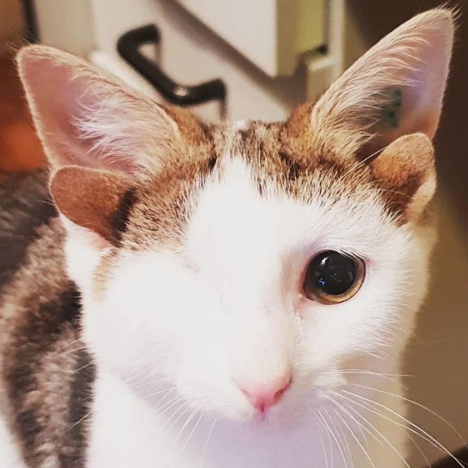 gatinho 4 orelhas 5