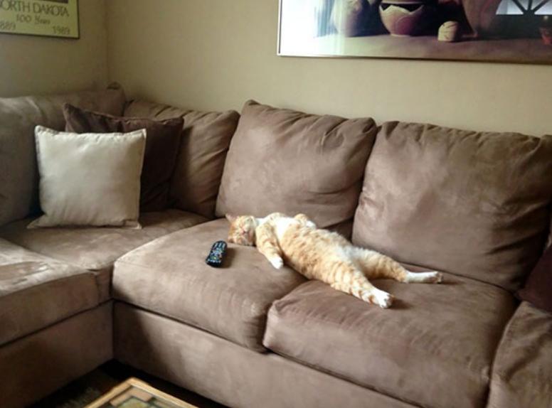 gatos posições estranhas 10