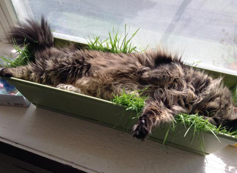 gatos posições estranhas 11
