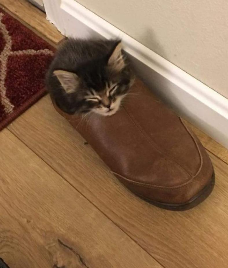 gatos posições estranhas 15