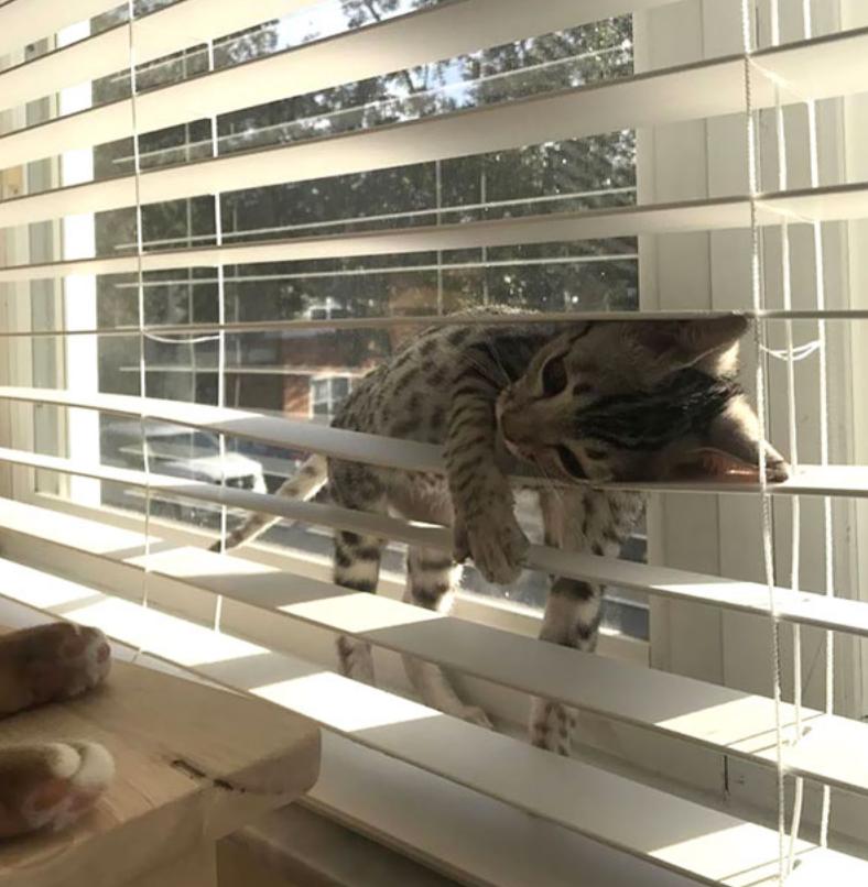 gatos posições estranhas 16