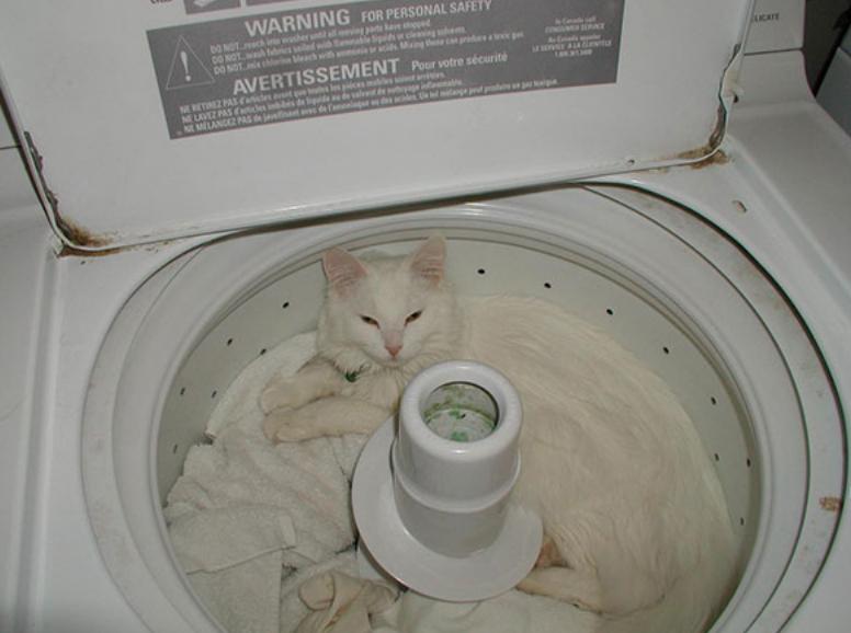 gatos posições estranhas 17