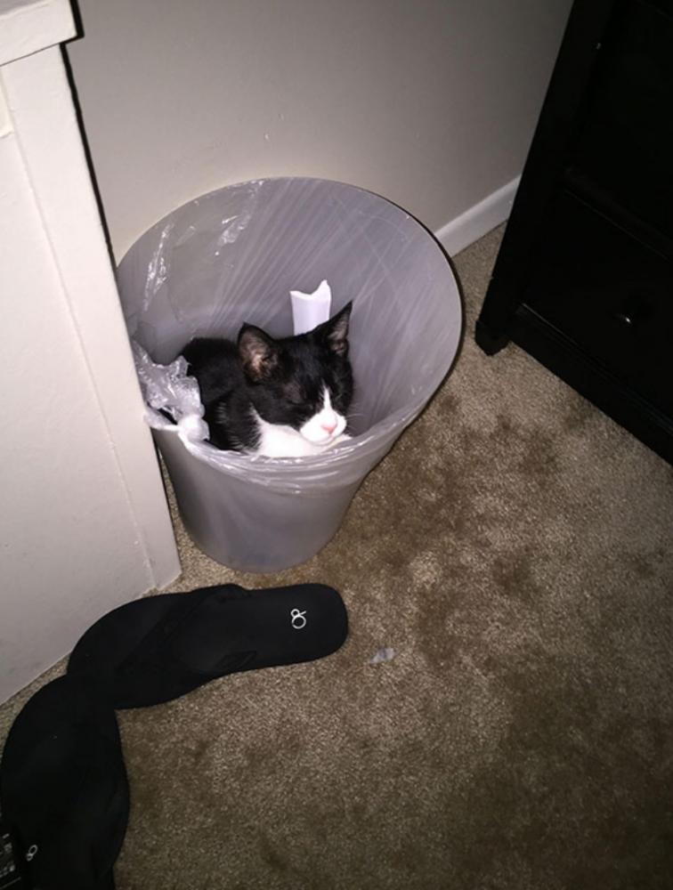 gatos posições estranhas 19