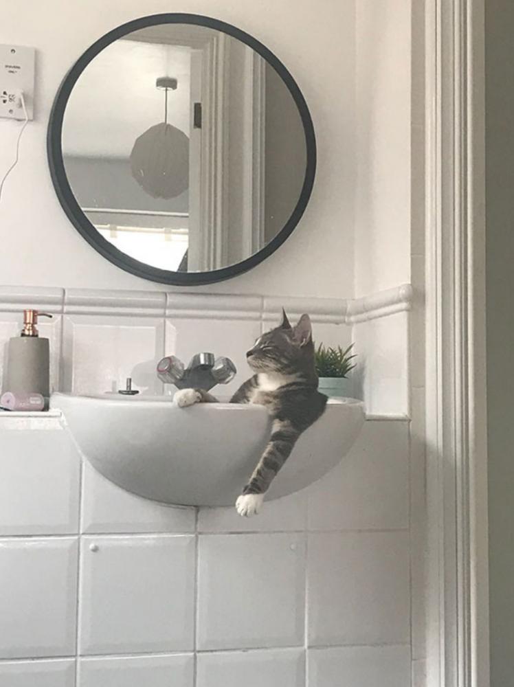 gatos posições estranhas 4