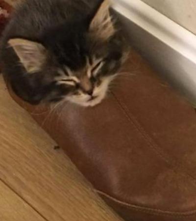 Acrobatas da natureza: gatos dormindo nas posições mais inacreditáveis