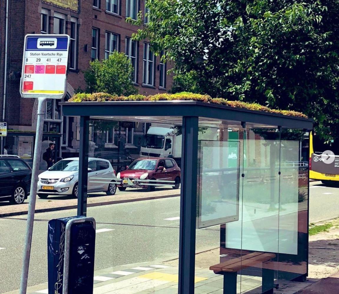 ponto de ônibus abelhas 3