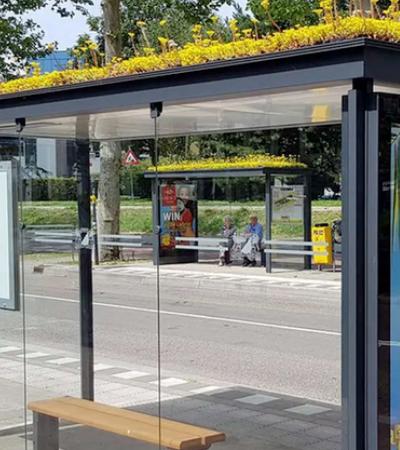 Holanda inclui plantas e flores em pontos de ônibus para presentear as abelhas