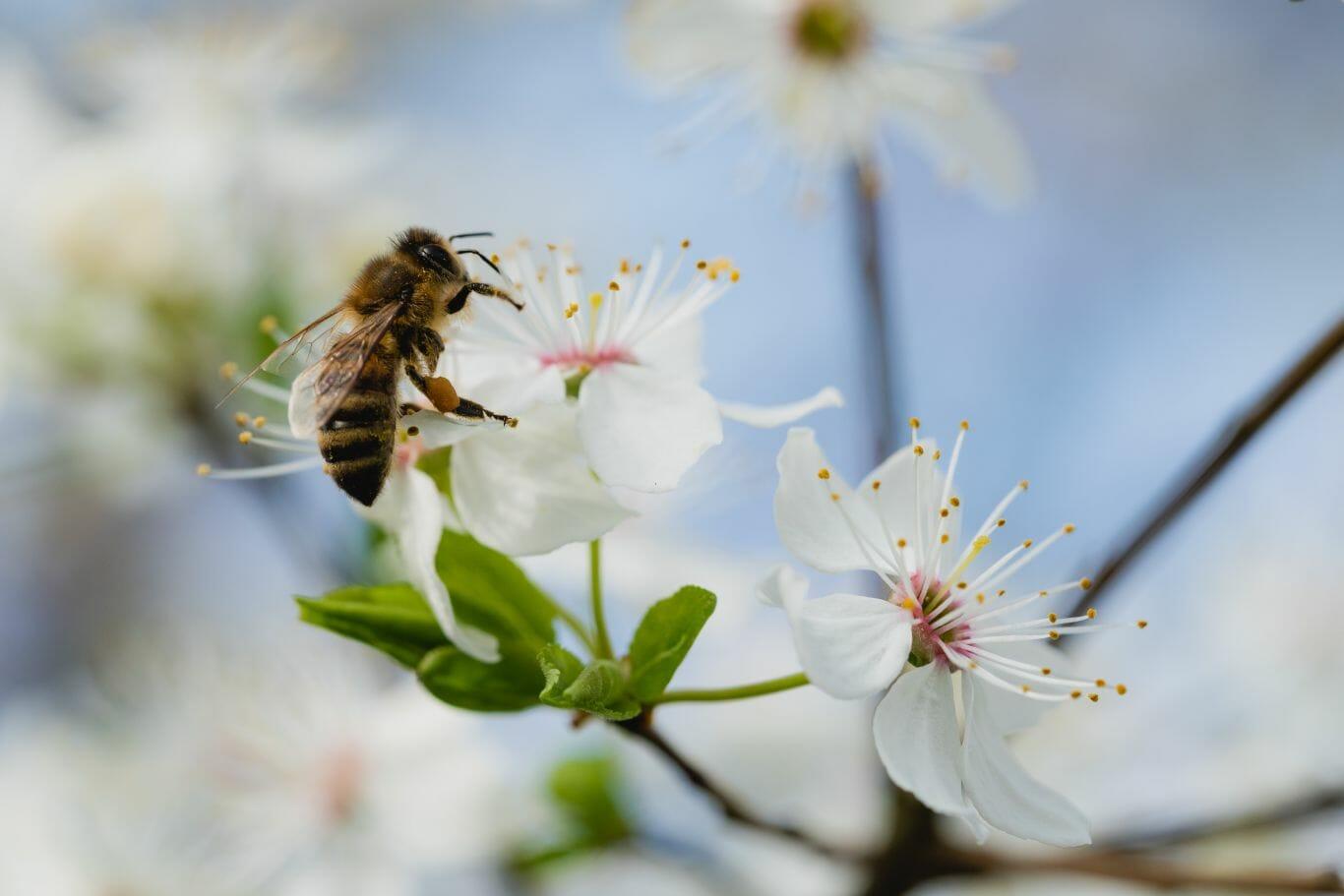 proteção das abelhas 1