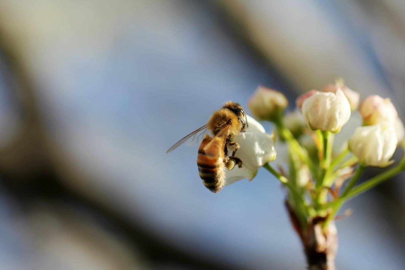 proteção das abelhas 3