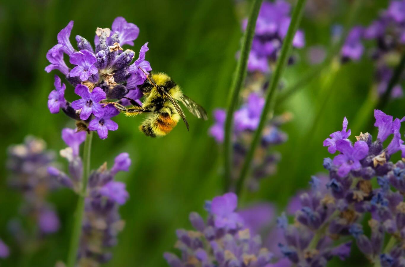 proteção das abelhas 4
