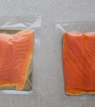 Empresa cria embalagens biodegradáveis feitas a partir de cascas de mariscos descartadas