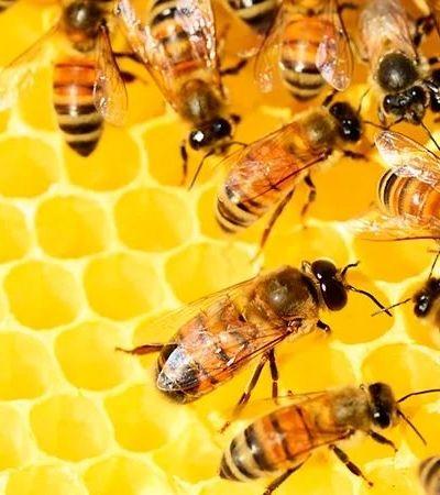 500 milhões de abelhas morrem no Brasil. E os agrotóxicos podem ser principal causa