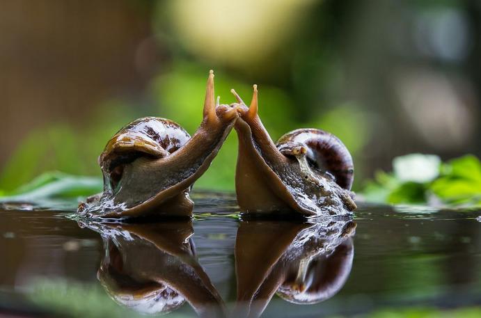 Beijo de caracol