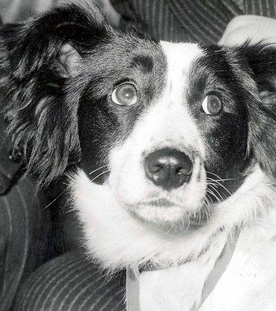 Lassie e outros 3 cachorras e cachorros que fizeram história