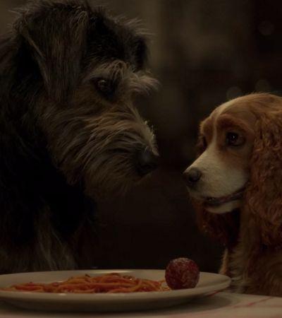 Filme live action de 'A Dama e o Vagabundo' tem elenco com cachorros resgatados