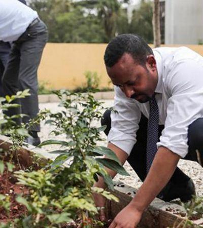 Etiópia quebra recorde e planta 350 milhões de árvores em 12 horas