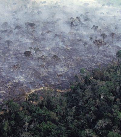 Biólogo descreve a Amazônia em chamas: 'Animais carbonizados e silêncio no lugar do verde'
