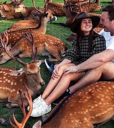 Nesse parque japonês você consegue conviver – e até alimentar – 1,4 mil cervos
