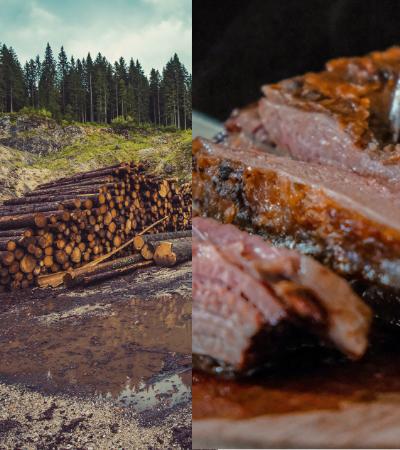 Relatório da ONU reafirma que consumo de carne ajuda no aquecimento global