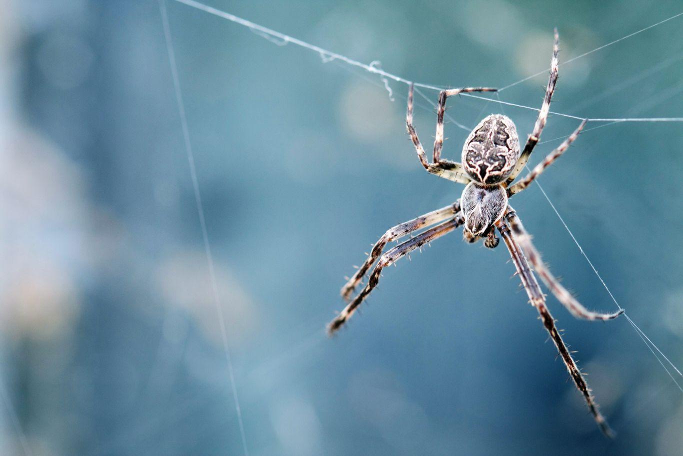 aranhas agressivas mudanças climáticas 3