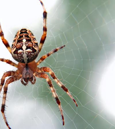 Aranhas estão se tornando mais agressivas por conta de mudanças climáticas