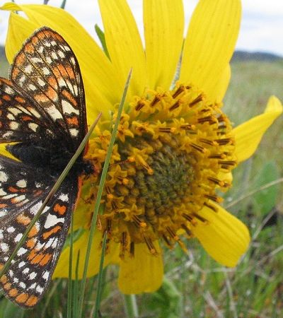 Como estas detentas estão ajudando a salvar espécies de borboletas ameaçadas