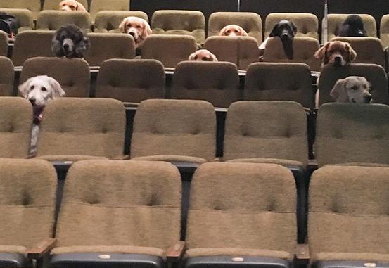 cães de serviço teatro 1